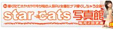 『star cats写真館』